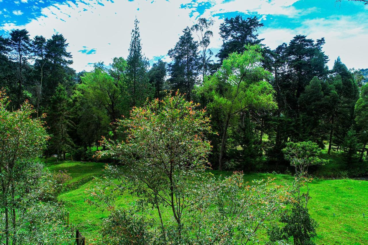 LA BOHEMIA  | RIONEGRO,